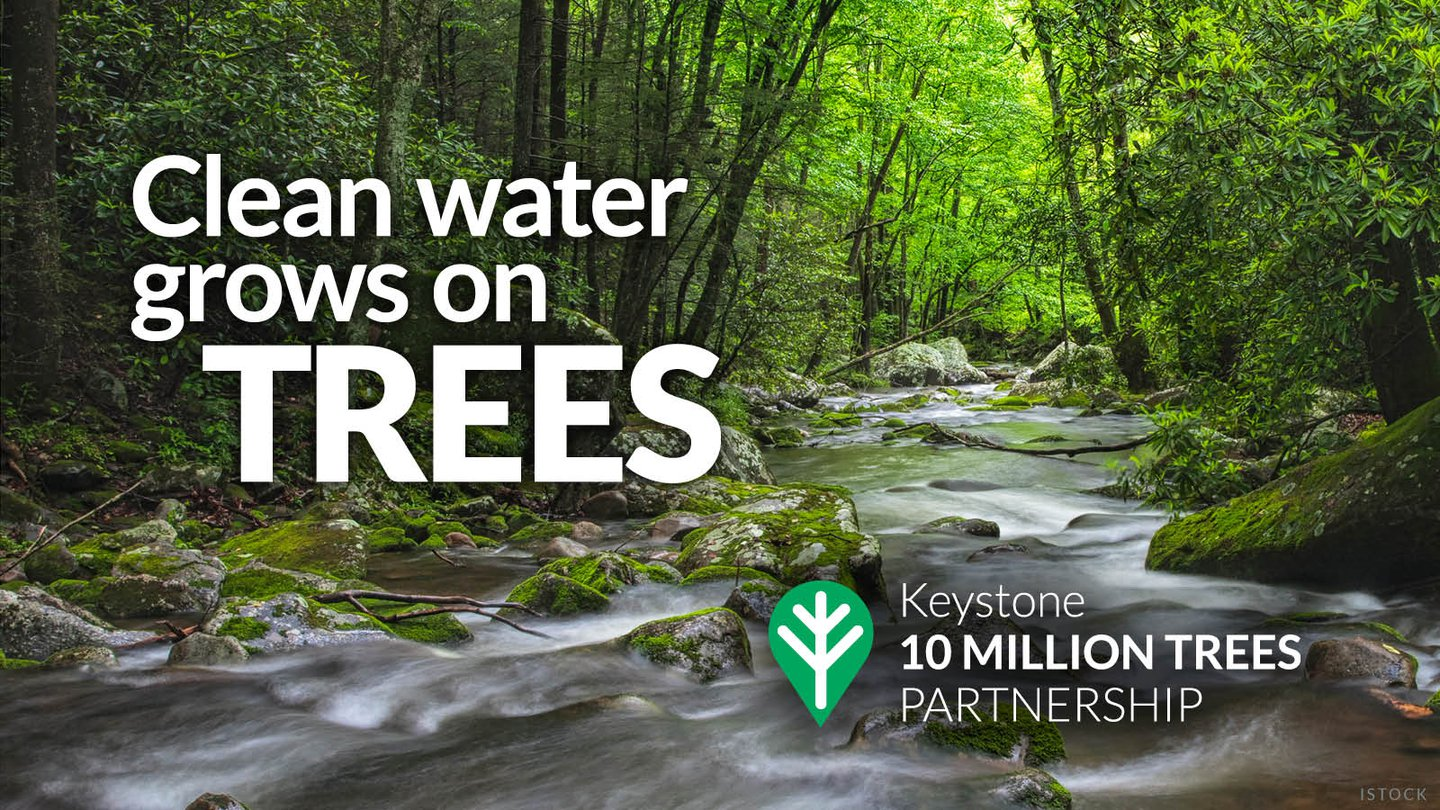 Clean Water grows on trees